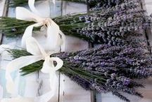 Wedding in lavender theme / My dream wedding - I lover lavender. My favourite flower. :)