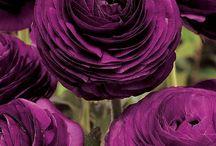 Purple / by Amber Putman- Cronin