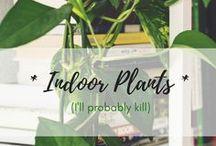 *Indoor Plants*