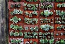 Gardening/Outdoor Decor / by Maryanne Mikus
