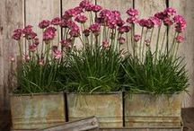 planters, containers, hanging baskets / by Cindy Santonas