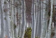 Trees and Woodlands / by Cindy Santonas
