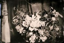my photography portfolio / wedding photography // beauty photography // tintypes // pretty / by Heather Curiel
