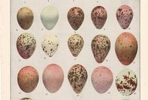 Eggs and nests / Inspiration for my art work.