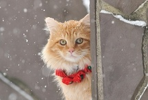 Pets > DIYs, Tips, & Products / Adorable Animals: providing Pinterest with cute, fluffy, hairballs of preciousness. And besides the kittens and puppies, you'll find an occasional wild one - like an owl or sloth!