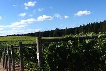 Wine Country Safari