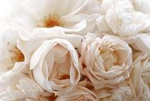For the Love of Peonies / by Lisa Brown