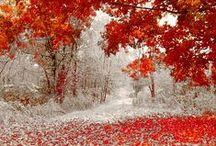 Fall Colors Wedding / by Lisa Brown