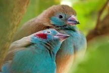 Love Bird Wedding / by Lisa Brown