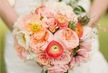 Peach Wedding / by Lisa Brown