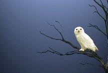 Animals--Birds--Owls / by Nina Holdman Rader