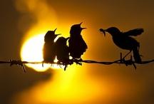 Animals--Birds--1 Unsorted/Uncatagorized / by Nina Holdman Rader