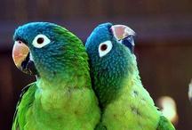 Animals--Birds--Parrots, Parakeets, Love Birds / by Nina Holdman Rader