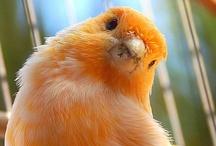 Animals--Birds--Orange Birds / by Nina Holdman Rader