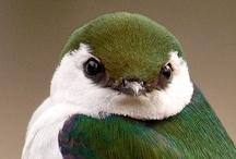 Animals--Birds--Green Birds / by Nina Holdman Rader