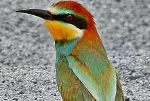 Animals--Birds--Multi-Colored Birds / by Nina Holdman Rader