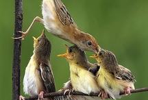 Animals--Birds--Brown Birds / by Nina Holdman Rader