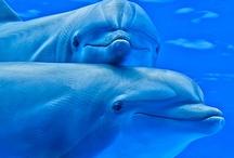 Animals--Aquatic&Plant--Dolphins, Porpus / by Nina Holdman Rader