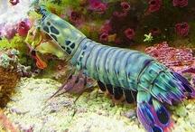 Animals--Aquatic&Plant--Lobsters, Shrimp, Crabs / by Nina Holdman Rader