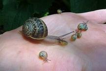 Animals--Aquatic/Land--Snails / by Nina Holdman Rader