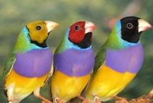 Animals--Birds--Finches / by Nina Holdman Rader