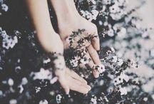 Flora / by Isabela Versteeg
