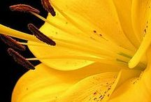 Yellow as the sun / Everyday you can feel #joy. #Sun shines on you and everything around is #yellow. #Yellow #mood