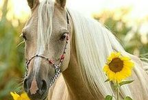It's a HORSE Thing / by Lisa