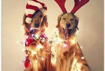 holidays / by Janie Ferris