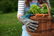 Organic Gardening: How Does Your Garden Grow?  / Check out what organic gardening is all about. Join The Collective and participate in our gardening challenge. Take a picture of your plants, flowers or garden for a chance to win an organic herb garden kit!  / by The Collective