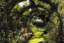 cloistered garden / My garden / by Cesca Faber