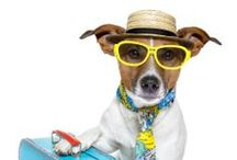 Dog Travel Musthaves (and cute travelling dogs) / Instead of leaving your dog behind, take them with you on your trip!