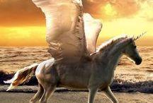 Pegasus ❤
