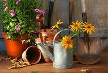 Gardens / by Corinne