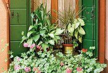 Garden / by Jennifer Cooper