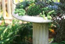 Garden ideas / by Kris Voelker Riley