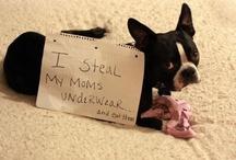Dog shaming. / by Monica Wilson