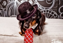 Dachshunds / Weinerfest!!! / by Leila Koster Millinery