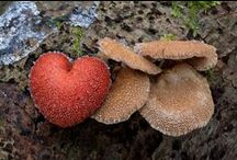 Fungi / by Corinne
