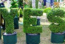 """KIXX ♥ (G)Loves Buxus """"To Impress"""" / Buxus, Taxus hagen zijn altijd leuk in de tuin!"""