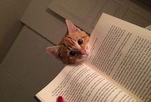 Books / by Kris Voelker Riley