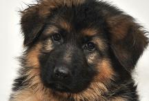 I Love Dogs! / by Debra Perez
