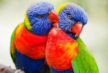 birds / by Debra Perez