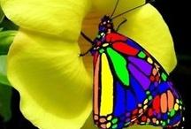 butterflies / by Debra Perez