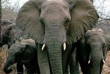 Elephants / by Debra Perez
