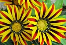 Nature at its best (Flowers) / by Debra Perez