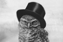 // owl