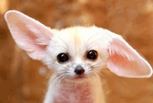 cute.critters / by Virenda Casey