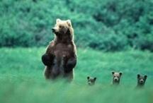 My Furry Creatures / I love animals!