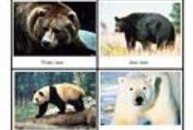 Bear theme / by D Park